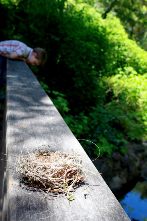 We found a bird's nest on a bridge, and Soren found crayfish