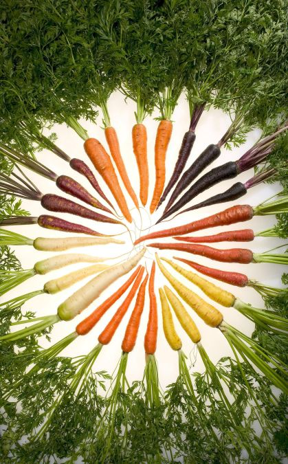 Rainbow colored carrots