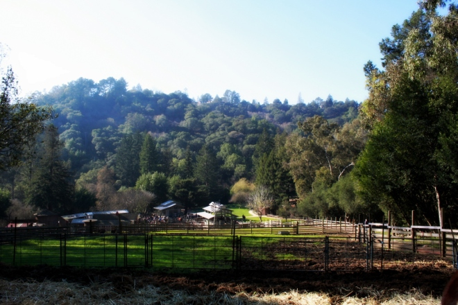 Tilden's Little Farm has been looking as pretty as a postcard