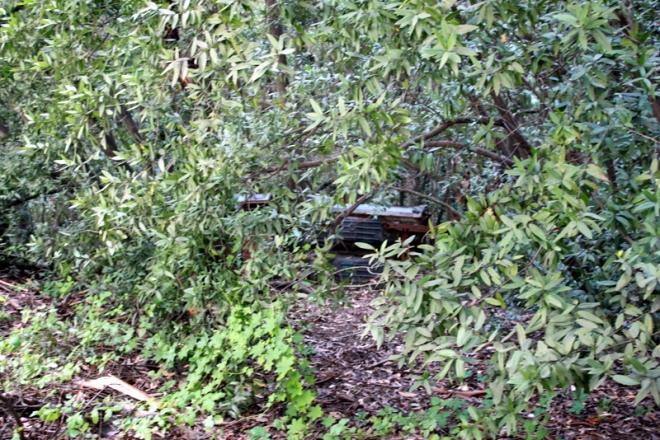 Half-hidden, rusty car off Sinawik Loop Trail