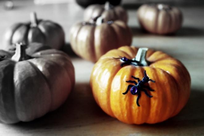 Mini pumpkins at home